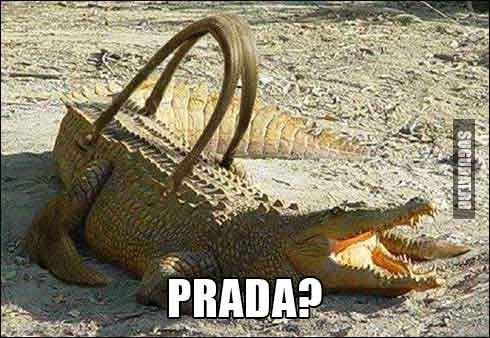 Viitoare geanta din crocodil Prada?