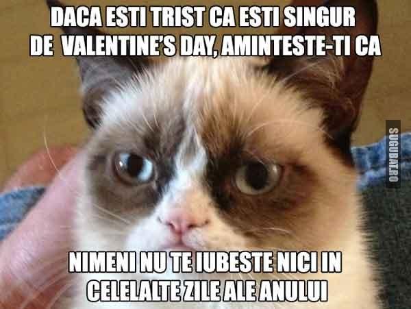 Grumpy Cat: Daca esti trist ca esti singur de Valentine s Day, aminteste-ti ca