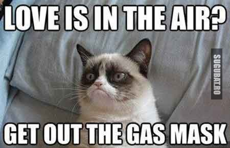 Grumpy Cat: Love is in the air