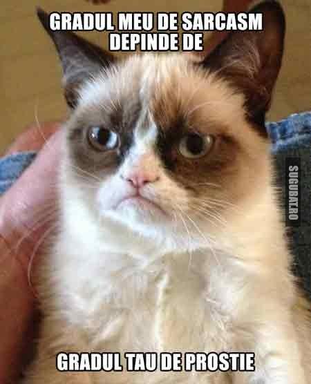 Grumpy Cat: Gradul meu de sarcasm depinde de
