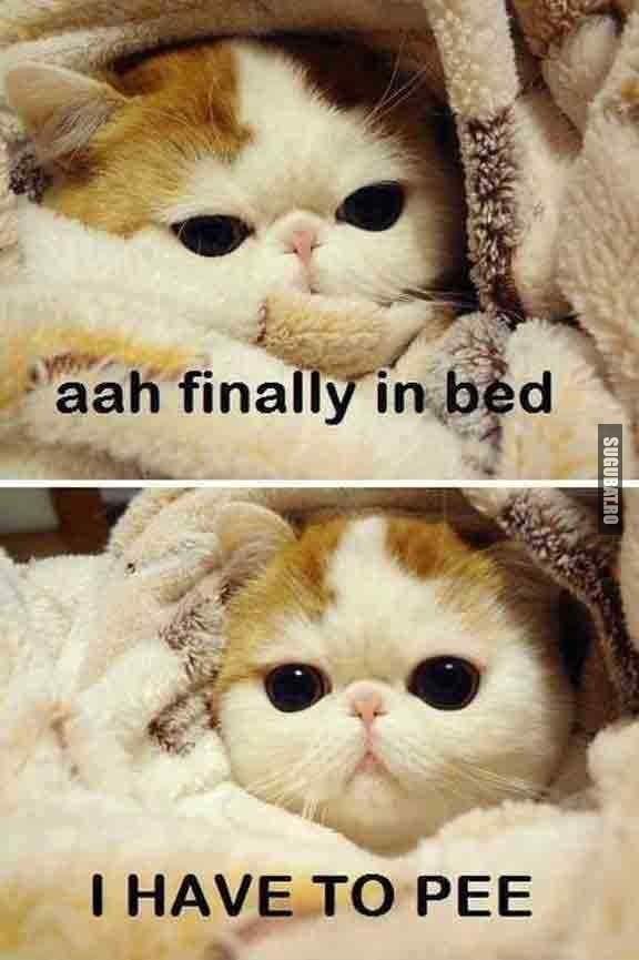 Cand te asezi in pat si realizezi ca trebuie sa mergi la baie
