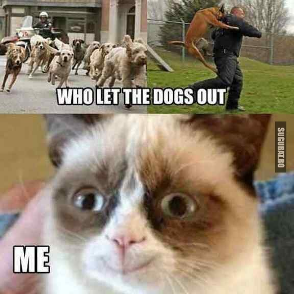 Cine a lasat cainii afara?