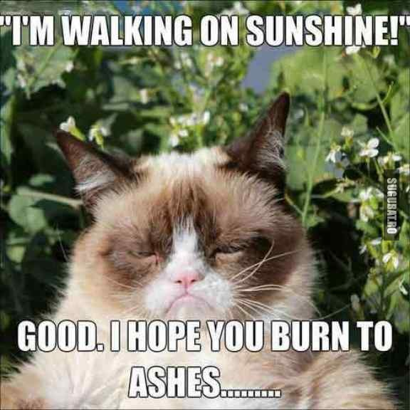 Grumpy Cat: I'm walking on sunshine!