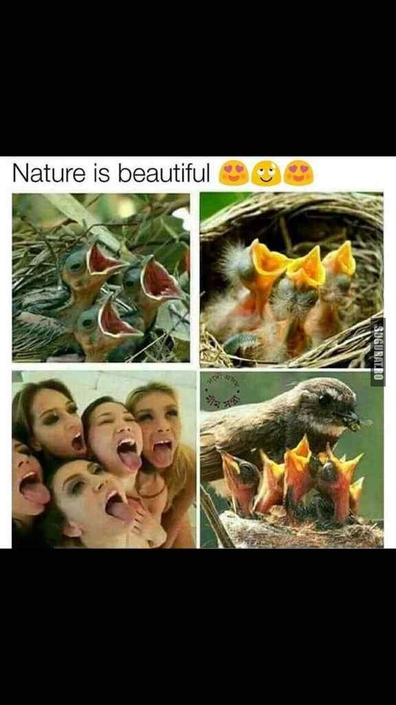 Natura este frumoasa