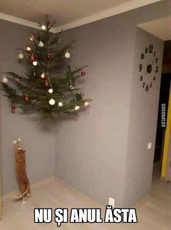 Cand îi faci o surpriza pisicii de Craciun