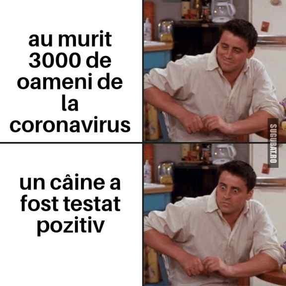 Cand afli că un câine are #coronavirus