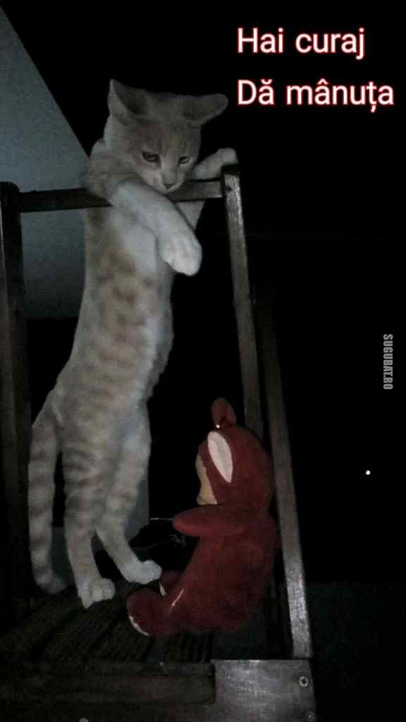 Pisicuta Briciola si Teletubbies♥️